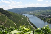 The Moselle on River Cruises Europe